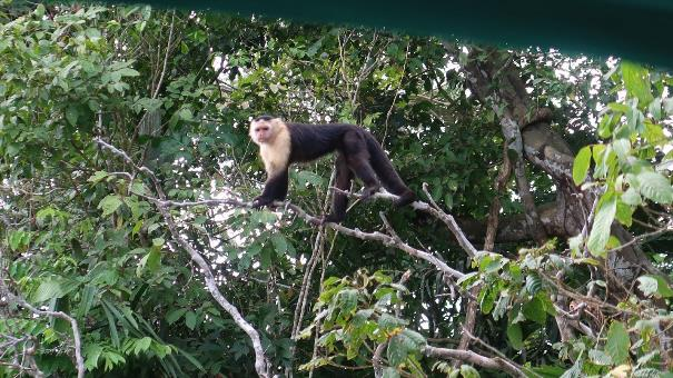 Monkey Island in Panama