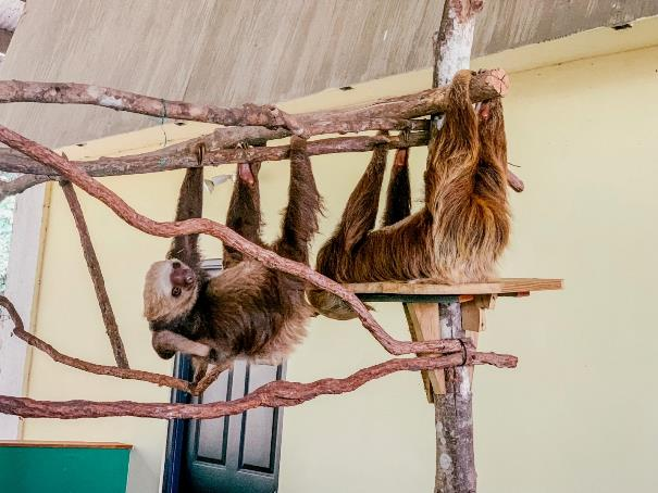Sloth sanctuary in Panama